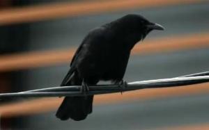 crow_1744749c